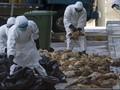 Dua Orang Tewas Akibat Flu Burung di China
