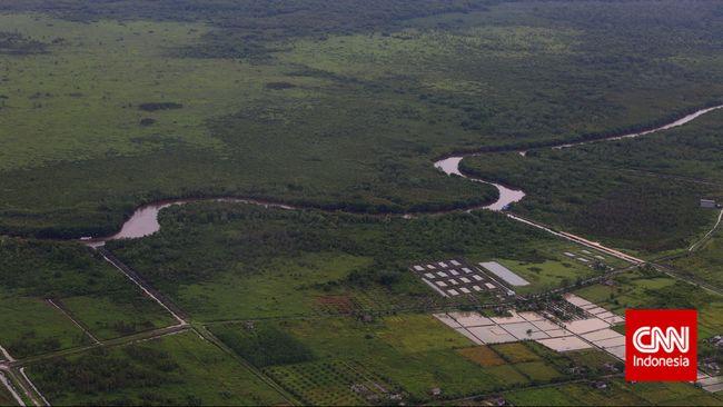 Hutan Kalimantan Bakal Hijau Kembali Jika Pindah Ibu Kota