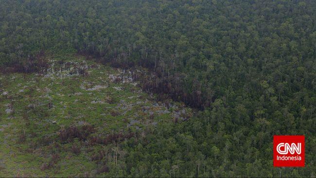 Bappenas Jamin Ibu Kota Tak Ganggu Hutan Lindung Kalimantan
