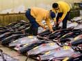 Kebijakan Menteri Susi Dituding Sebabkan Ekspor Ikan Anjlok