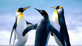 Penguin Kehilangan Kemampuan Kenali Tiga Rasa Makanan