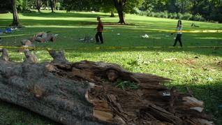 Jelang Libur Akhir Tahun, Kebun Raya Bogor Ditutup