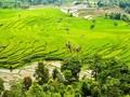 Tahun Ini, Bali Hadirkan 11 Desa Wisata Baru