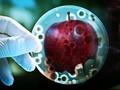 WHO Waspadai 12 Jenis Bakteri Baru
