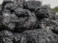 Kuartal I 2020, Realisasi DMO Batu Bara Capai 31,53 Juta Ton