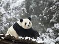 Google Panda, Boneka yang Bisa Diajak Ngobrol