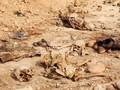 Ada Mayat Bayi dan Wanita di Kuburan Massal Korban ISIS