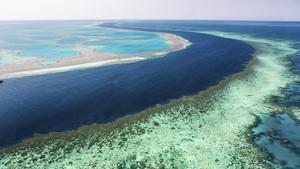 Sayembara Pulihkan Great Barrier Reef Berhadiah Rp21,3 Miliar