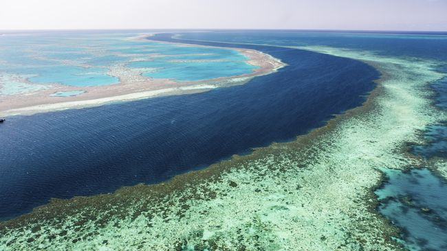Menjadi Saksi Kerusakan Great Barrier Reef