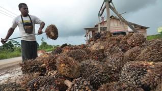 Moratorium Sawit Dinilai Tak Jalan Efektif di Tanah Papua