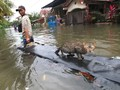 Awan Tebal di Utara Jakarta, Hujan akan Turun Rata di Ibukota