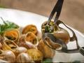 Gastronomi Perancis Ikut Cegah Kepunahan Hewan