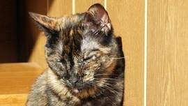 Pukul Kucing Sampai Mati, Warga Bekasi Terancam 9 Bulan Bui