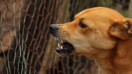 Diterkam Anjing Gembala Saat Hendak Sekolah, Siswi Meninggal