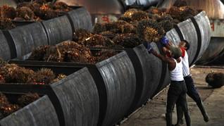 KPK Khawatir Insentif Biodiesel Gerus Alokasi Dana Replanting