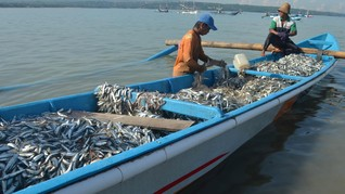 Meski Menanjak, Ekspor Ikan Natuna Masih di Bawah Potensi