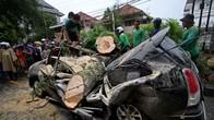 Pohon Berusia Ratusan Tahun Menimpa Belasan Mobil di Sukabumi