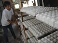 Jokowi: Garam Industri Impor Tak Boleh Bocor ke Pasar