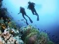 Menyaksikan Indahnya Indonesia Timur dengan Menyelam