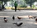 Ahok Siap Lelang Pengolahan Taman di Jakarta