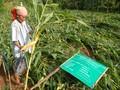 Global Wakaf Ikut Hapus Kemiskinan di Desa
