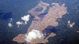 Hutan Punya Peran Penting untuk Ekonomi Masyarakat Miskin