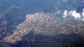 Lahan Kritis Indonesia 14 juta Ha, Pemerintah Kewalahan