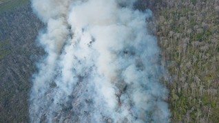 Terbukti Bakar Hutan, WALHI Desak Pemerintah Cabut Izin BMH