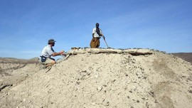 Fosil Hutan Purba Usia 350 Juta Tahun Ditemukan di China