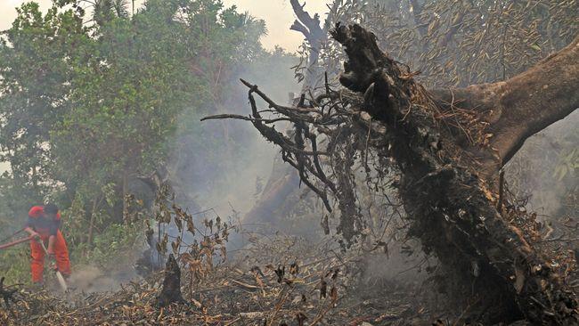 BNPB Bongkar Motif dan Modus Kebakaran Hutan dan Lahan