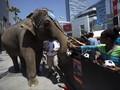 Portugal Berencana Larang Sirkus Hewan