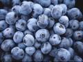 Blueberry, Cegah Pikun hingga Atasi Uban