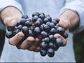 Memetik Manfaat Kesehatan dari Anggur Hitam