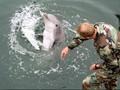 Lumba-lumba Militer Jaga Pasokan Bom Nuklir Amerika