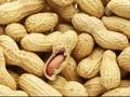 Konsumsi Kacang Turunkan Risiko Kanker Usus
