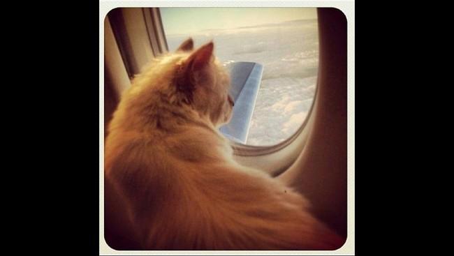 Choupette bertemu Lagerfeld melalui seorang teman. Ketika itu teman Lagerfeld menitipkan kucing kepadanya saat hendak berpergian keluar negeri selama dua minggu. Tapi setelah kembali, sang teman enggan mengurus Choupette. (Dok. Karl Lagerfeld)