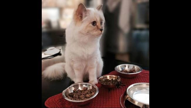 Saking sayangnya, Lagerfeld merasa ia mengerti apa kemauan Choupette.