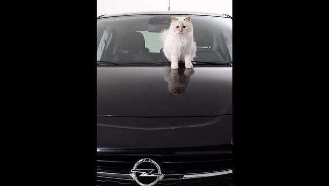 Terbukti perancang busana berumur 81 tahun itu sangat memuja kucingnya. Choupette bahkan telah dibuatkan buku kumpulan foto berjudul The Private Life of a High-Flying Fashion Cat.(Dok. Karl Lagerfeld)