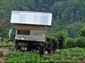 Kisah Gunung Biru, Benteng Terakhir Teroris Santoso