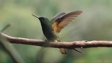 Taman Kota di Meksiko Jadi Pusat Konservasi Burung Kolibri