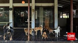 Wisatawan Keluhkan Populasi Anjing Liar di Mandalika