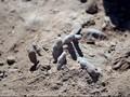Puluhan Jenazah Ditemukan di Kuburan Massal di Raqqa