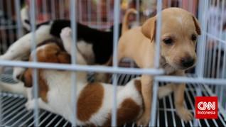 Kasus 5 Anak Anjing Disiram Air Panas oleh Ipar Dipolisikan