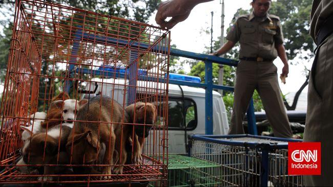 Dinas KPKP DKI soal Razia Anjing: Tak Ada Penangkapan