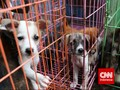 Shenzhen, Kota Pertama di China Larang Konsumsi Anjing-Kucing