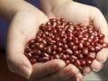 Memetik Manfaat dari Konsumsi Protein Nabati