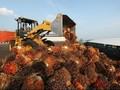 Indonesia akan Lawan Diskriminasi Sawit Uni Eropa ke WTO