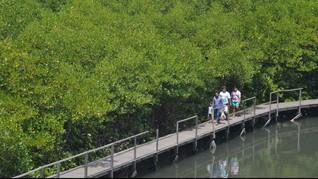 Pemerintah Butuh Duit Hingga Rp3 Triliun untuk Hutan Bakau
