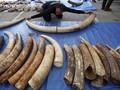 Singapura Sita Setengah Ton Gading Gajah dari Afrika