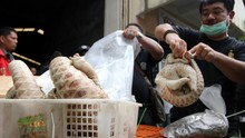 Trenggiling, Inang Corona yang Banyak Diselundupkan ke China